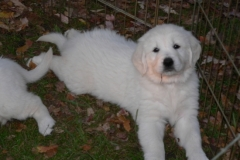 1_puppies12-08f