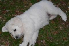 puppies12-08e