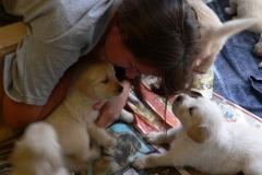 puppies21708playtime
