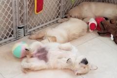puppiesResized_20181214_081018
