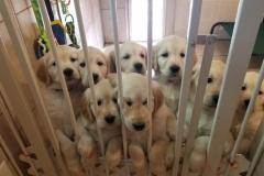 puppiesResized_20181226_140619