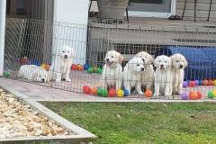 puppiesResized_20181228_171012