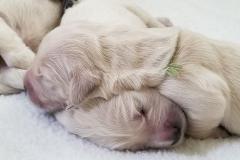 puppiesResized_20190401_130027