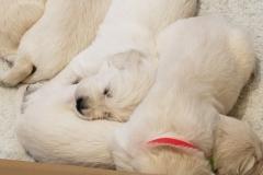 puppiesResized_20190416_074452