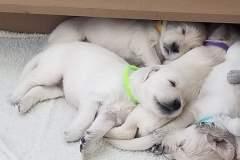 puppiesResized_20190416_161104