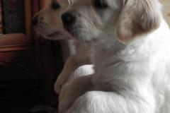 puppiesbella5wks2