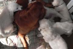 puppiesfaith8wks1