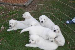 puppiesgroup3
