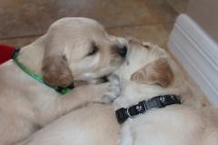 puppiesmiley4wks7-1