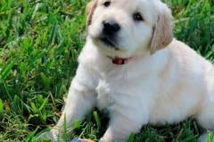 puppiesmiley5wks10