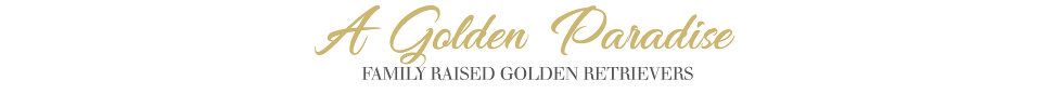 A Golden Paradise logo